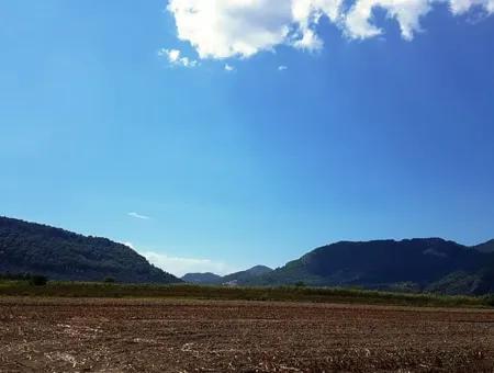 Muğla Ortaca Güzelyurtta Satılık 19000 M2 Verimli Arazi