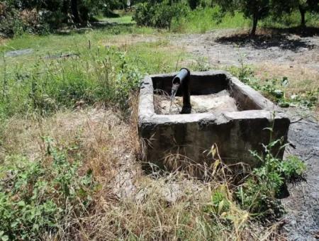 Muğla Köyceğizde 2650 M2 Müstakil Tapulu Narenciye Bahçesi Satılık