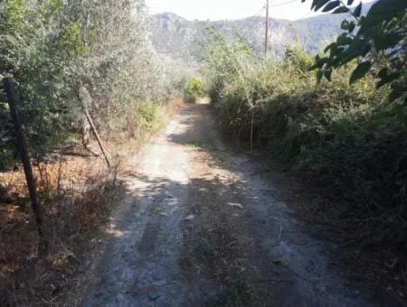 Muğla Ortaca Dalyanda 7520 M2 Bakımlı Müstakil Nar Bahçesi Satılık